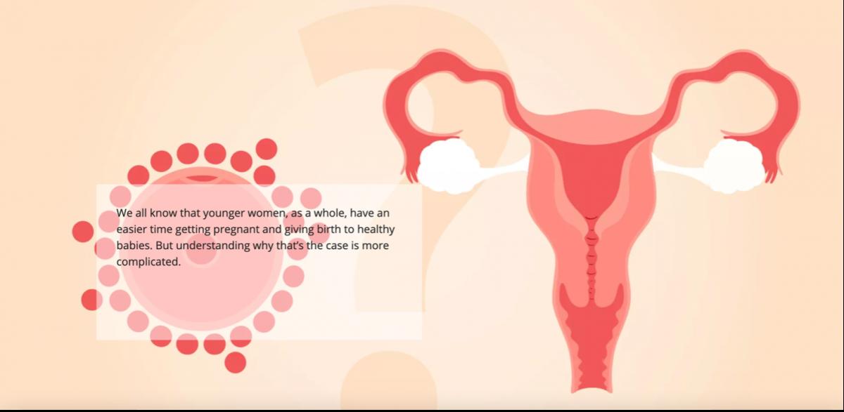 Grafische weergave baarmoeder met eicel